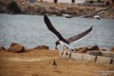 Aug-08-Bird 014.JPG