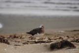 Aug-08-Bird 015.JPG