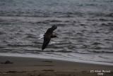 Aug-08-Bird 016.JPG
