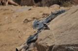 Aug-08-Bird 023.JPG