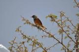 Aug-08-Bird 024.JPG