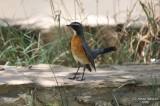 Aug-08-Bird 025.jpg