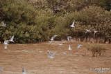 Aug-08-Birds 017.JPG