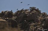 Aug-08-Birds 021.JPG