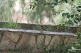 Aug-08-Cute bird in Abha.jpg