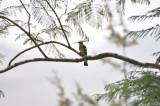 Aug-08_Bird 006.jpg