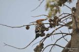 Aug-08_Woodpecker.jpg
