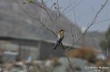 Bird_Hadda_018.jpg