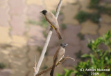 Bird_311.jpg