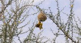 Bird1001.JPG