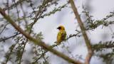 Bird1002.JPG