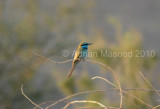 Bird_1010.jpg