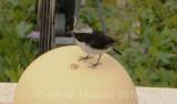 Bird_1006.jpg