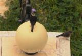 Bird_1007.jpg