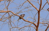 Bird_1008.jpg