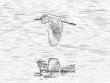 Bird_04.jpg