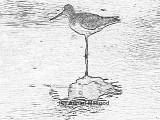 Bird_05.jpg