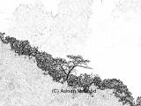 Trees1_sketch.jpg