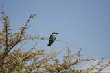 Bird 1 in Ghazzal Valley.JPG