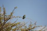 Bird in Ghazzal valley.JPG