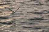Bird - 022.JPG