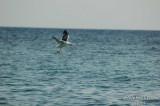 Bird - 048.JPG
