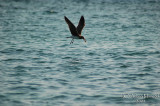 Bird - 052.JPG