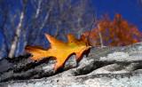 Autumn In Virginia 2007
