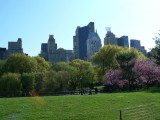 Manhattan buildings from Central Park