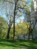 Spring trees in Central Park