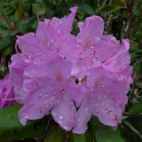 FLOWERS AFTER A RAIN - ISO 200