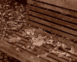 LEAVES ON A BENCH - SEPIA