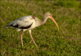 Grand oiseau (Large bird)