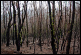 After the fire, Sealers Cove walking track 2