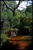 Black Fish Creek
