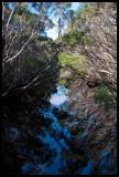 Sealers Creek 1