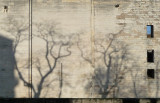 Les arbres font de l'ombre au chateau de versailles.