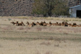 Fields off   395 were Elk hang out !!!