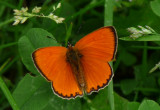 SCARCE COPPER