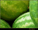 Wet Watermelons