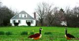 Ducks In 2 D