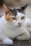 Cats by Nikon D700