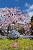 Honshu Japan