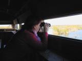 Watching birds from a hide - Mirando aves en un observatorio del Delta - Observant ocells des de un observatori del Delta