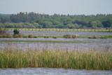 Dehesa de abajo full of water - La laguna de la Dehesa de Abajo en Doñana llena de agua