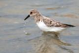 Birding in Extremadura and Doñana: Birdwatching Tour in spring 2010