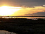 A sunset in the Tancada with a group of Flamingoes - Puesta de sol en el Delte del Ebro - Posta de sol a la Tancada