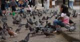 Feeding pidgeons II