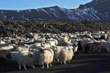 Göngur á Landmannaafrétti - þriðjudagur, 2007