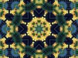 Dallas Yellow Flowers3